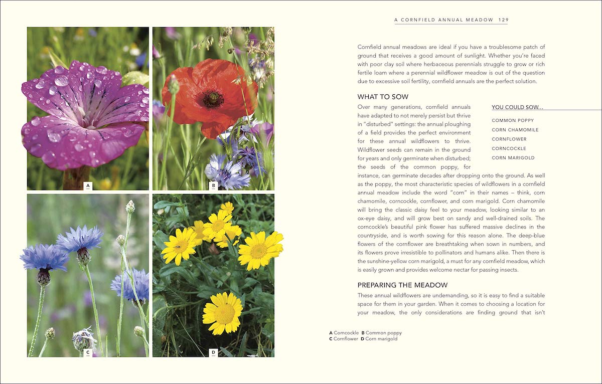 Wild Your Garden page preview: A cornfield annual meadow