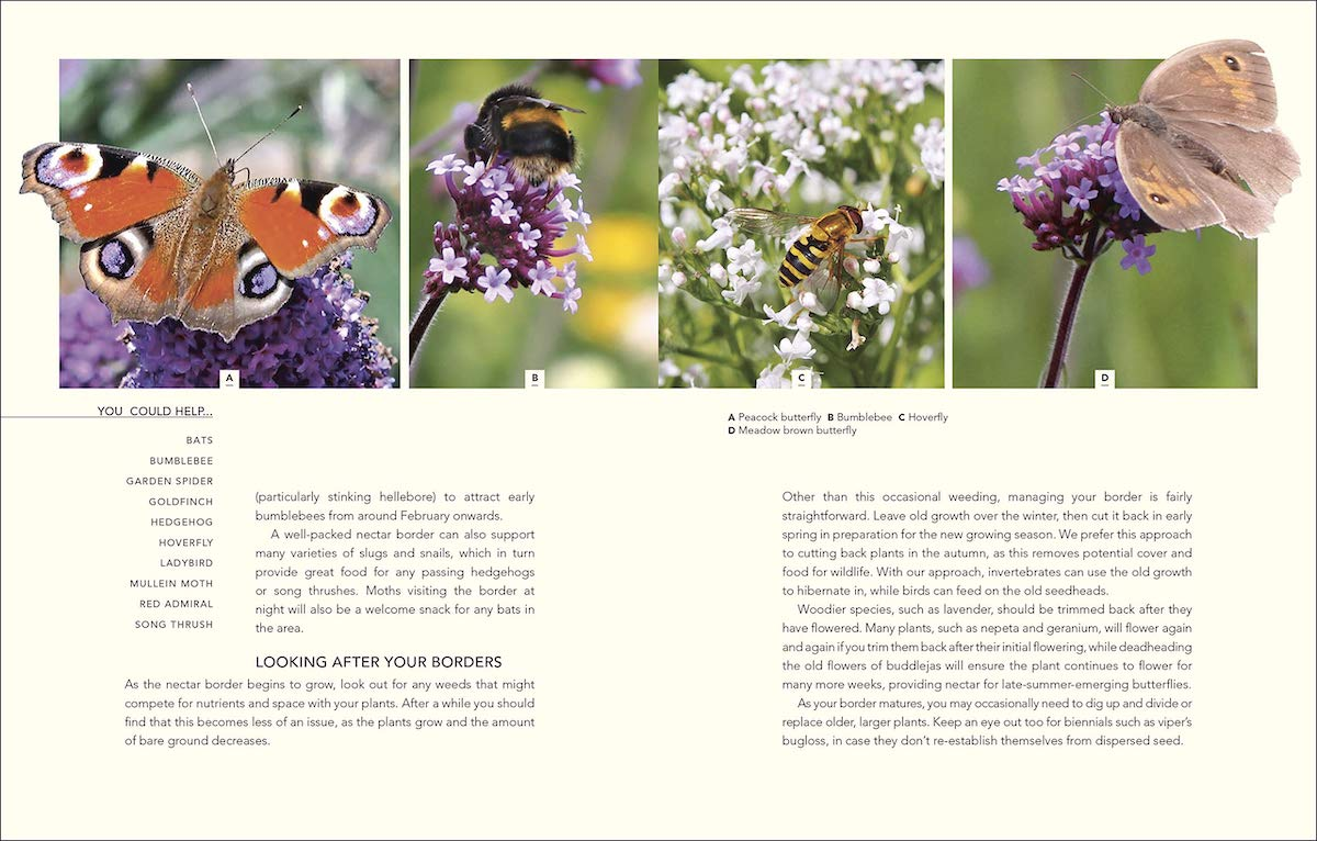 Wild Your Garden page preview: You could help